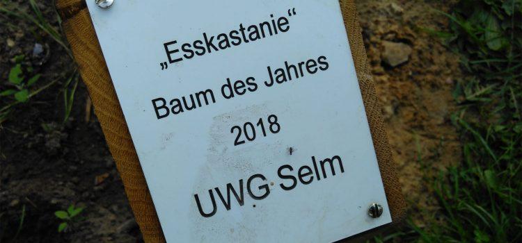Baum des Jahres 2018 - Esskastanie - UWG Selm
