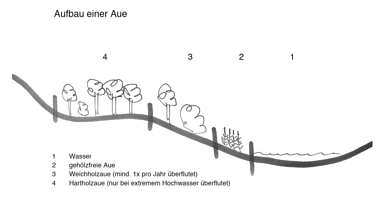 Auenzonierung, Skizze Peter Gehrmann