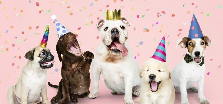 Hundewelpen feiern Silvester